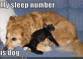 My sleep number  is dog