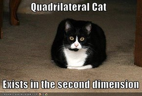 Quadrilateral Cat   Exists in the second dimension