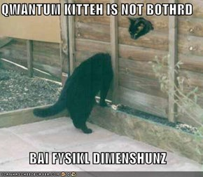 QWANTUM KITTEH IS NOT BOTHRD  BAI FYSIKL DIMENSHUNZ