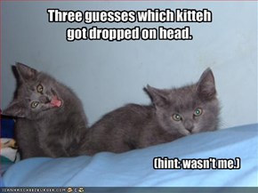 Three guesses which kitteh 