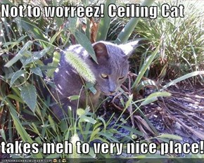 Not to worreez! Ceiling Cat  takes meh to very nice place!