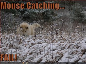 Mouse Catching...  FAIL!