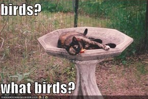 birds?  what birds?