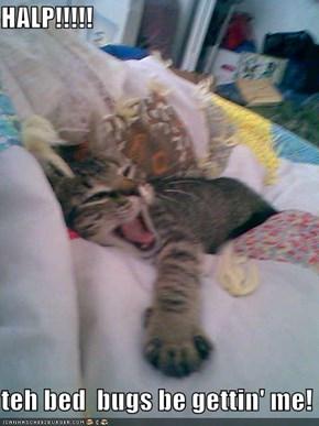 HALP!!!!!  teh bed  bugs be gettin' me!