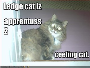 Ledge cat iz