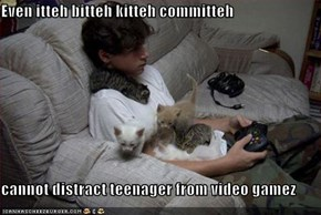 Even itteh bitteh kitteh committeh  cannot distract teenager from video gamez