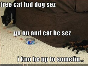 free cat fud dog sez go on and eat he sez i kno he up to somefin...
