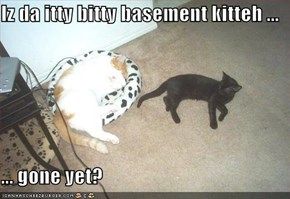 Iz da itty bitty basement kitteh ...  ... gone yet?