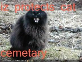 iz protects cat   cemetary