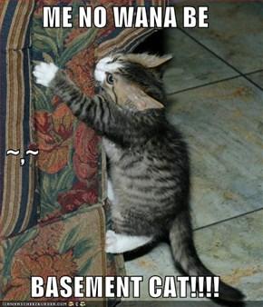 ME NO WANA BE  ~,~ BASEMENT CAT!!!!