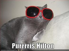 Purrrris Hilton