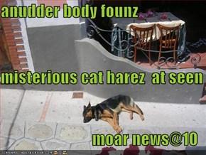 anudder body founz misterious cat harez  at seen moar news@10