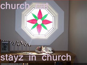 church cat   stayz in church