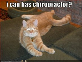 i can has chiropractor?