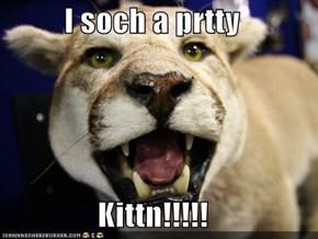 I soch a prtty   Kittn!!!!!