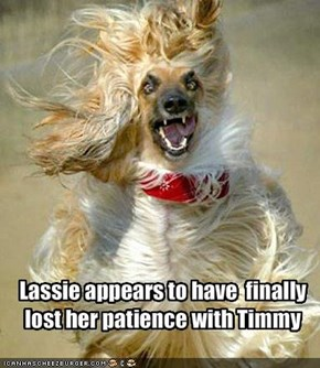 Lassie appears to have  finally lost her patience with Timmy
