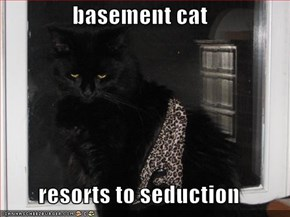 basement cat  resorts to seduction