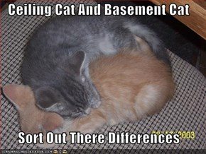 Ceiling Cat And Basement Cat  Sort Out There Differences