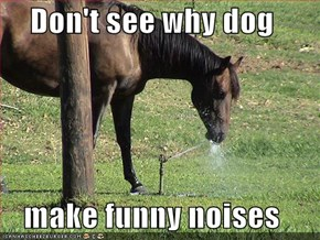 Don't see why dog  make funny noises