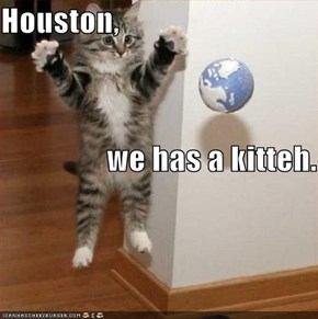 Houston,                  we has a kitteh.
