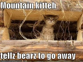 Mountain kitteh  tellz bearz to go away
