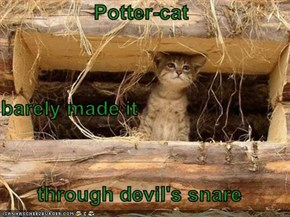 Potter-cat barely made it through devil's snare