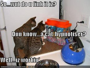 So...wut do u fink it iz?  Dun know...a cat-hypnotiser? Well...iz workin'.