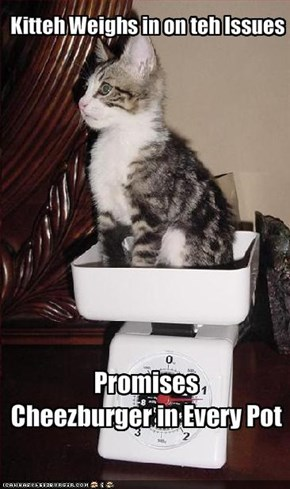 Kitteh Weighs in on teh Issues
