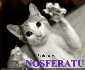 Lolcat is...
