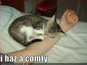 i haz a comfy