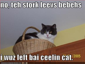 no, teh stork leevs bebehs  i wuz left bai ceelin cat.