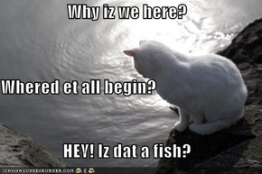 Why iz we here? Whered et all begin? HEY! Iz dat a fish?
