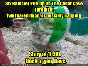 Six Hamster Pile-up On The Cedar Cove Turnpike! 