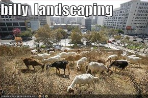 billy  landscaping