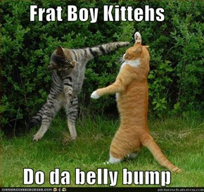Frat Boy Kittehs  Do da belly bump