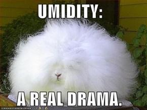 UMIDITY:  A REAL DRAMA.