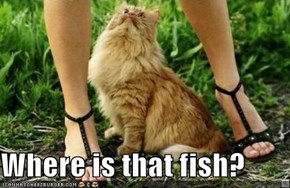 Where is that fish?