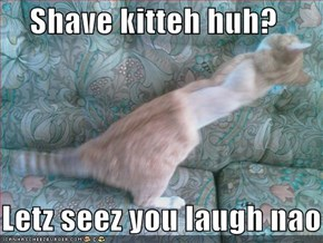 Shave kitteh huh?     Letz seez you laugh nao