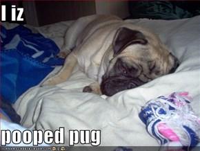 I iz  pooped pug