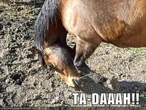 TA-DAAAH!!