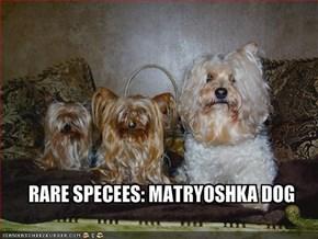 RARE SPECEES: MATRYOSHKA DOG