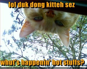 lol duk dong kitteh sez  whut's happenin' hot stuffs?