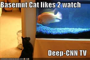 Basemnt Cat likes 2 watch  Deep-CNN TV