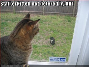 StalkerKitteh not detered by ADT