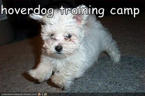 hoverdog training camp
