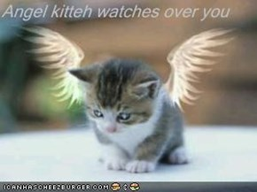 Angel kitteh watches over you