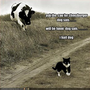ask the  cau for cheezburger