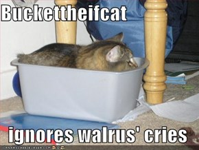 Buckettheifcat  ignores walrus' cries