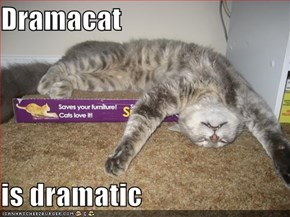 Dramacat  is dramatic