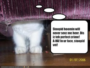 Stoopid hoomin will never seez me heer. Dis iz teh perfect crime! 